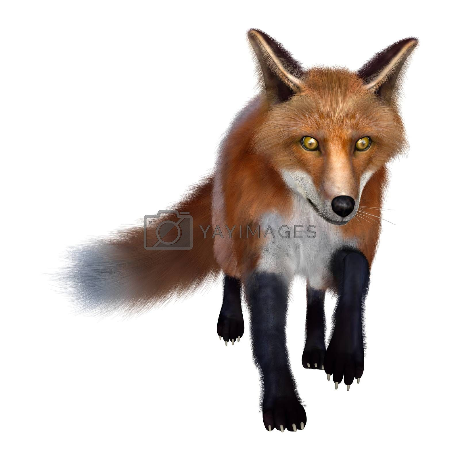 3D digital render of a red fox isolated on white background