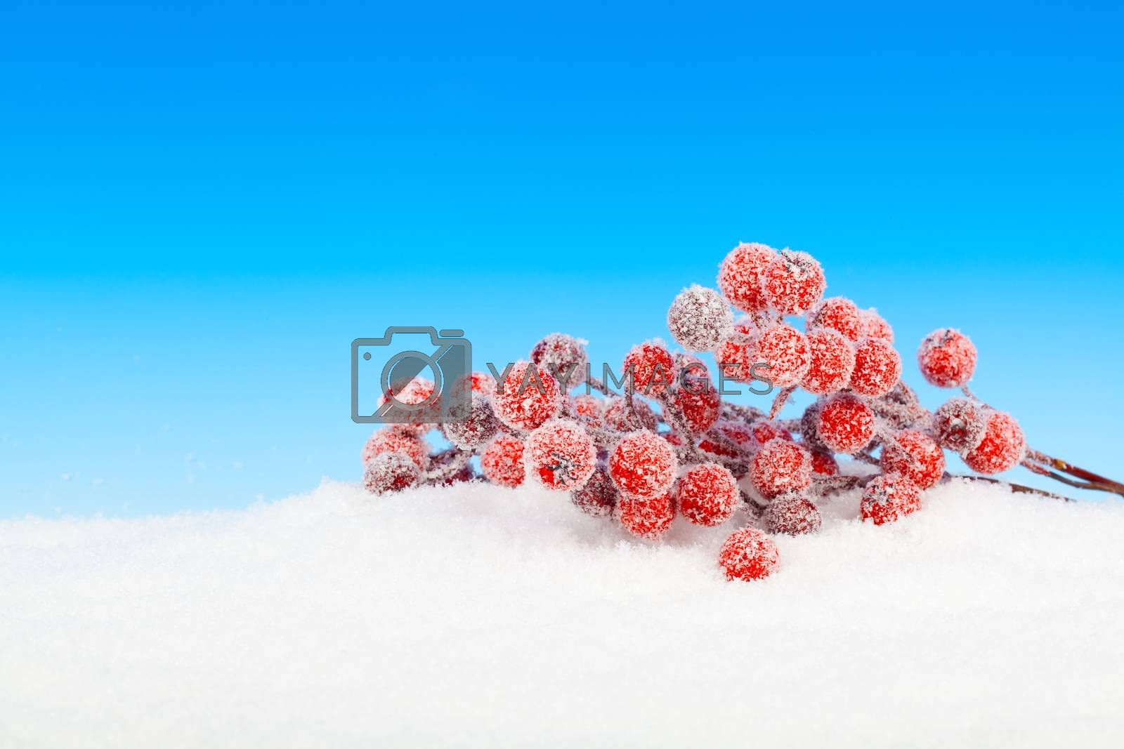 Christmas wreath on show, on blue background by motorolka