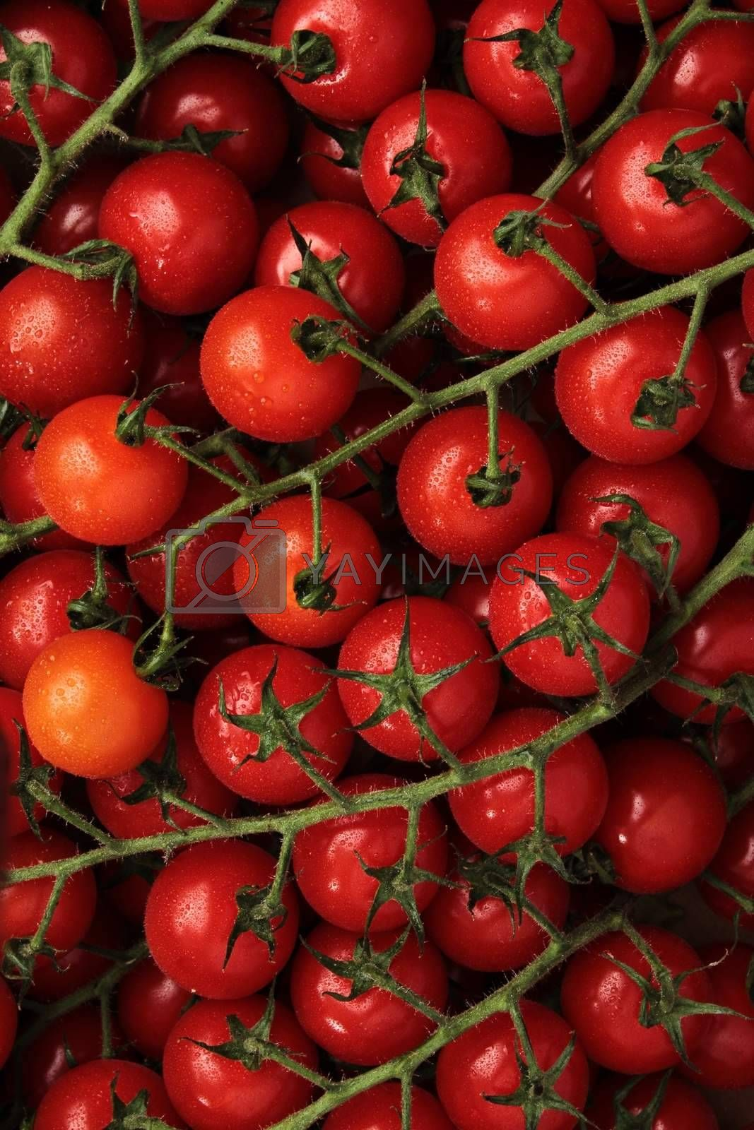 vine tomato background