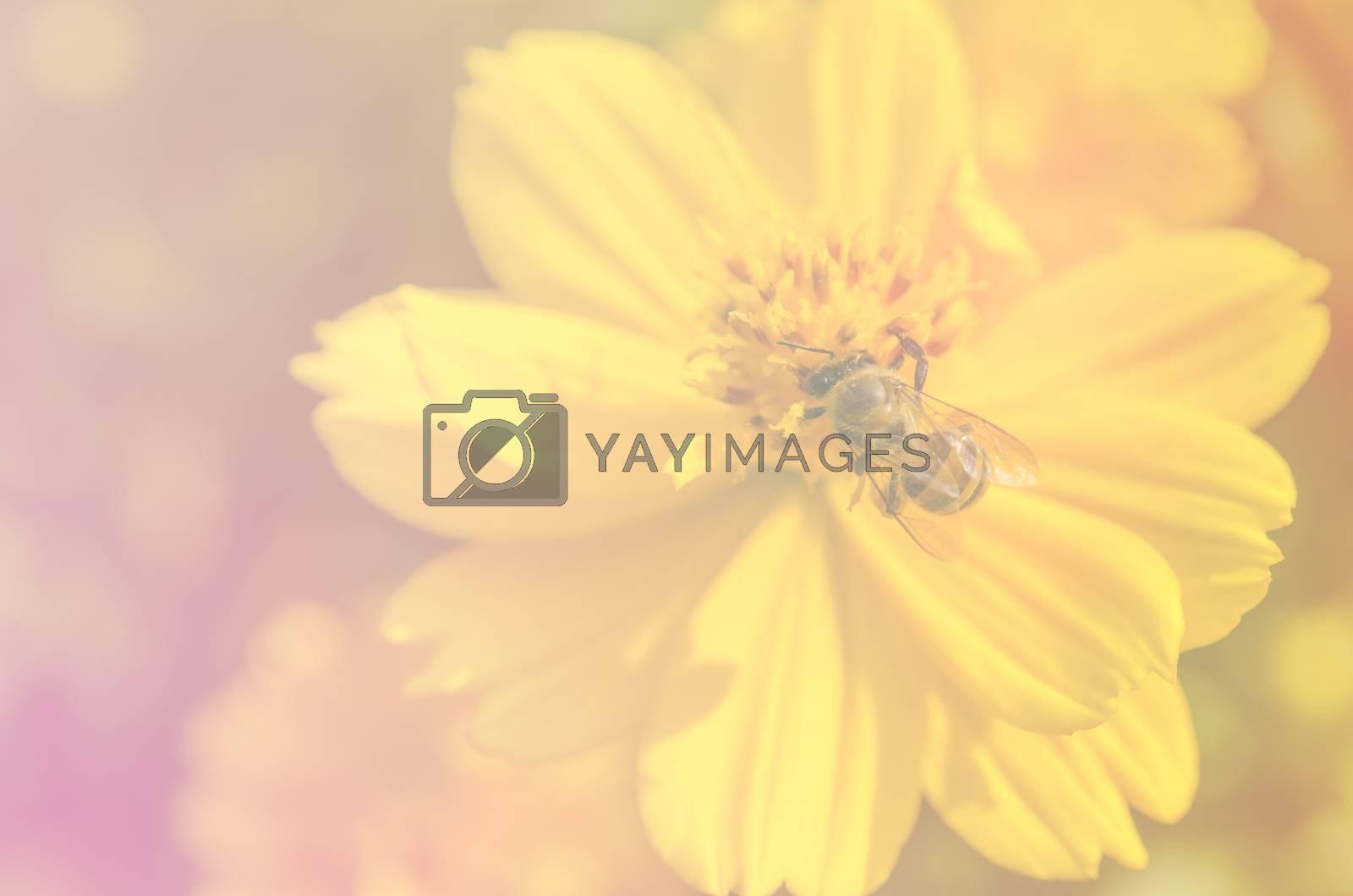 Close up macro beautiful light yellow flower