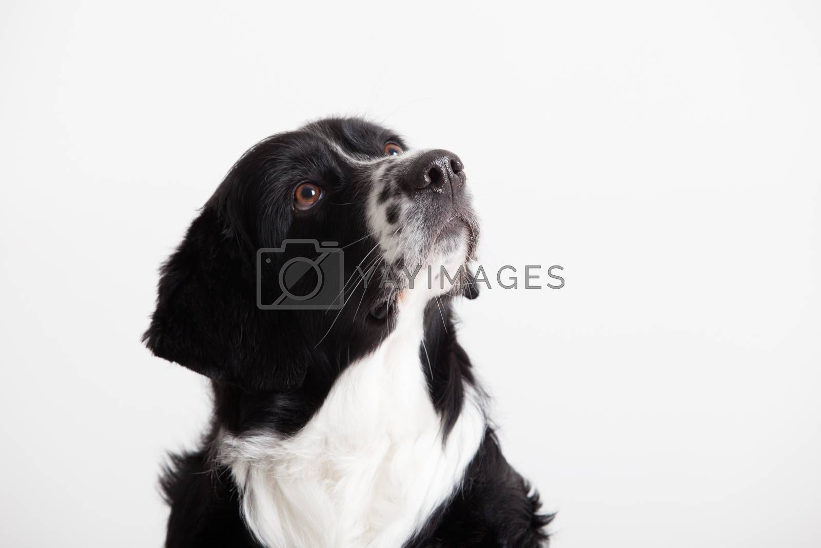 Sweet dog portrait by DNFStyle