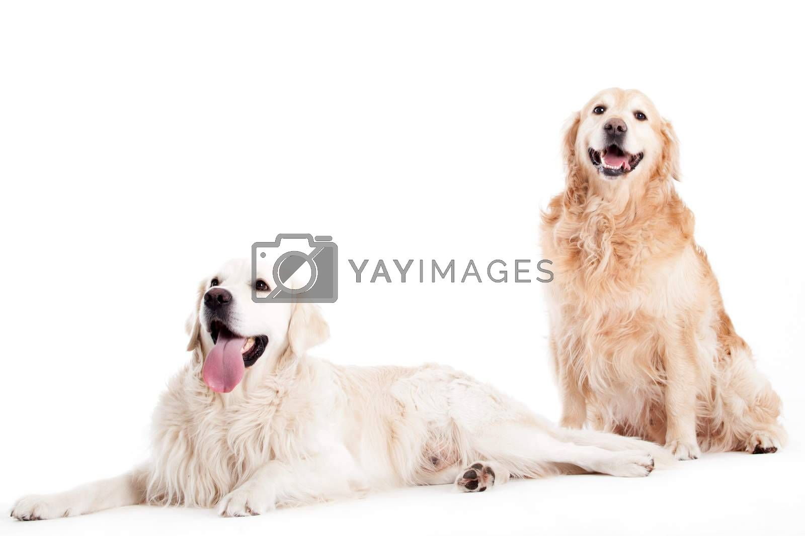 Happy dog photographed in the studio on a white background