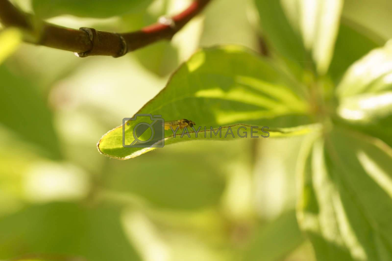 A young newly hatched fly sits between the bright green leaves of a plant.