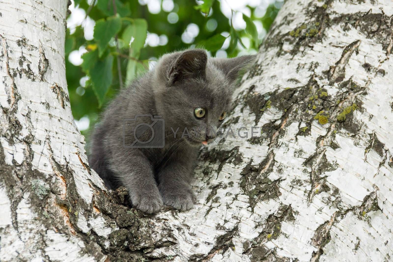 The photo depicts a kitten sitting in a tree