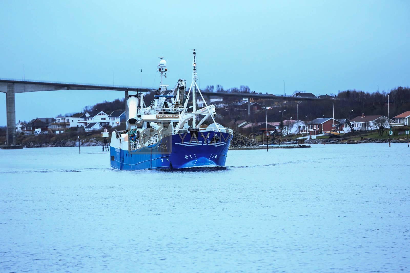 Fiske snurper Trønderhav på tur gjennom Brønnøysundet