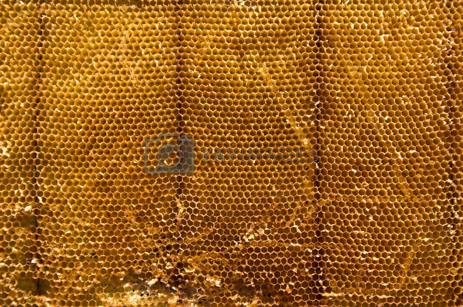 Royalty free image of Closeup of beeswax background by alis_photo