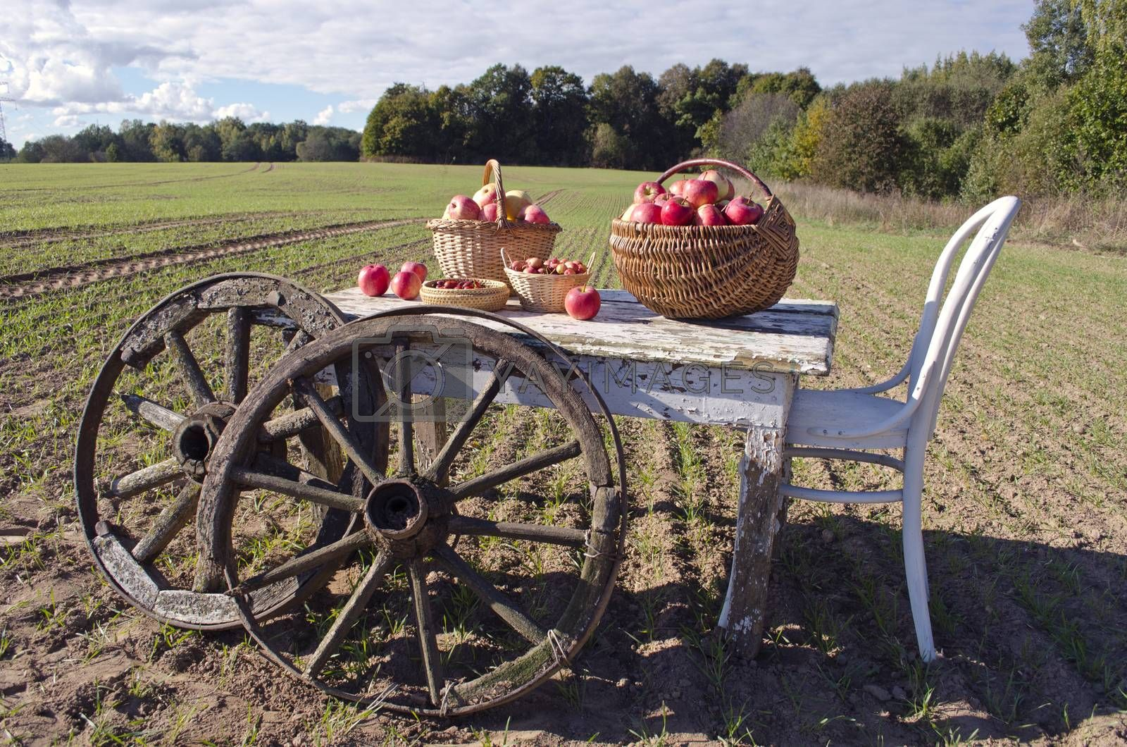 Royalty free image of Table with chair, apples and wooden wheels in field by alis_photo