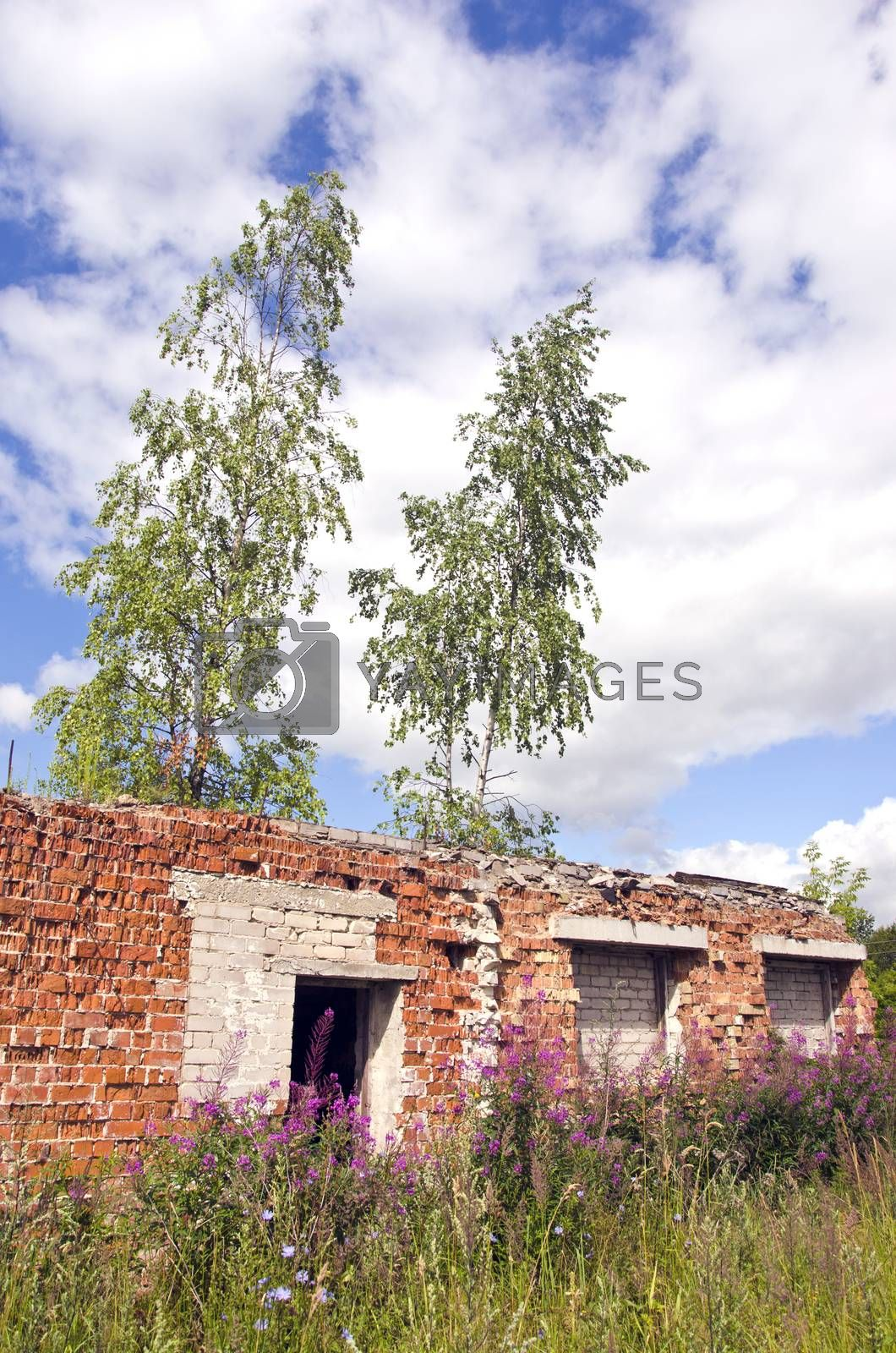Royalty free image of Desolate roofless and windowless brick house ruins by alis_photo