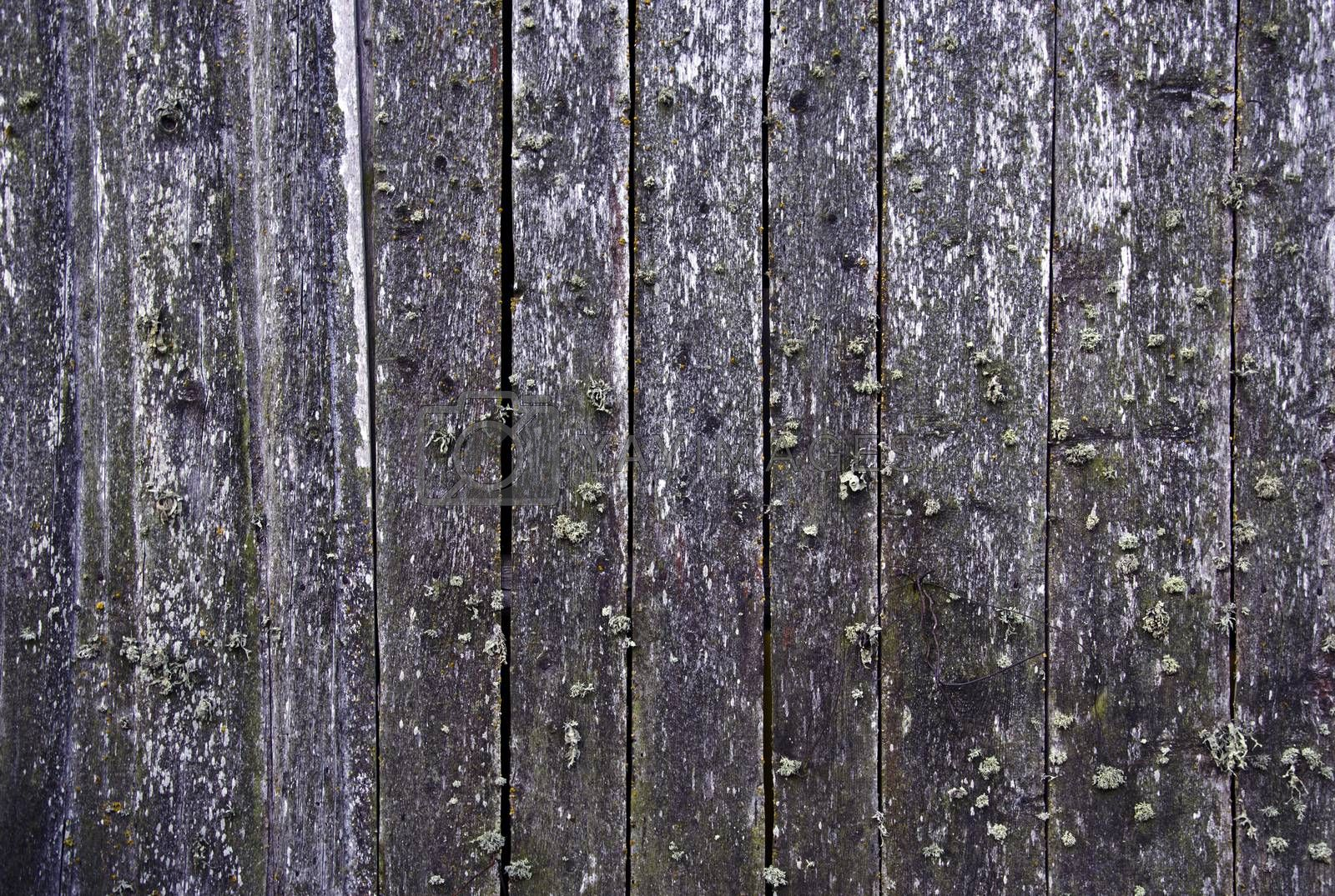 Royalty free image of Background with wooden wall by alis_photo