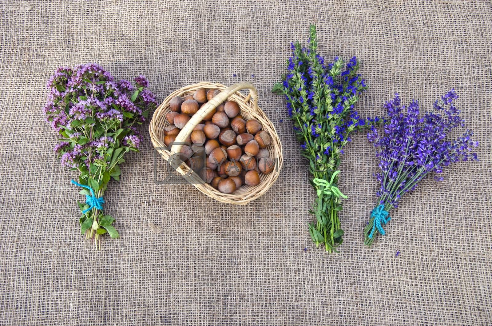 Royalty free image of Selection of herbs and hazelnuts on linen background by alis_photo