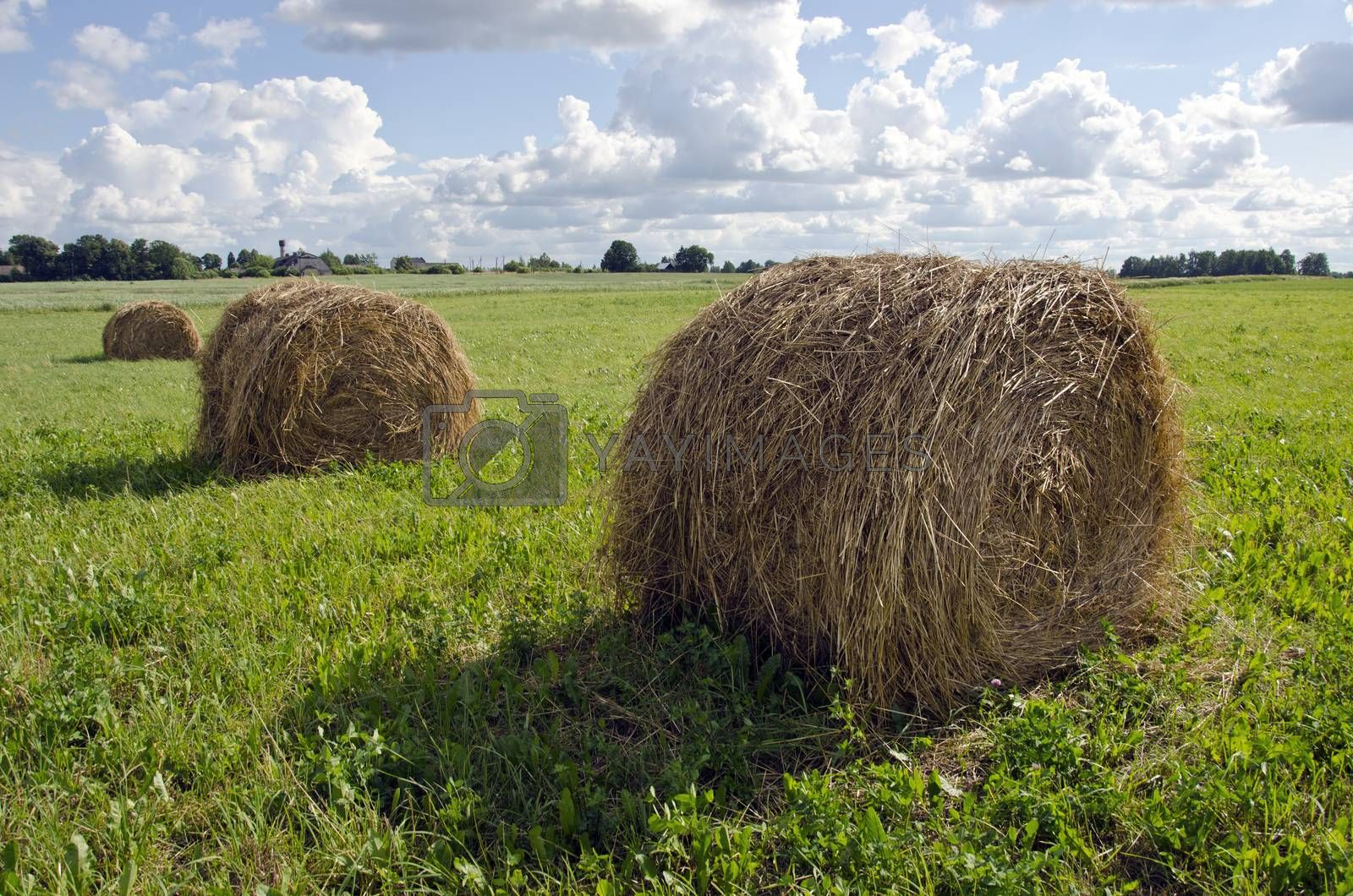 Royalty free image of Rural landscape with haystacks and farm by alis_photo