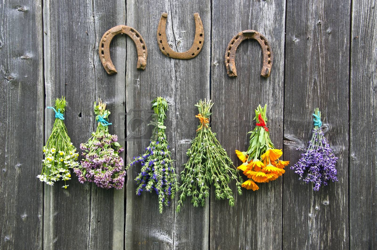 Royalty free image of Bundles  medical herbs and horseshoes hanging on wooden wall by alis_photo