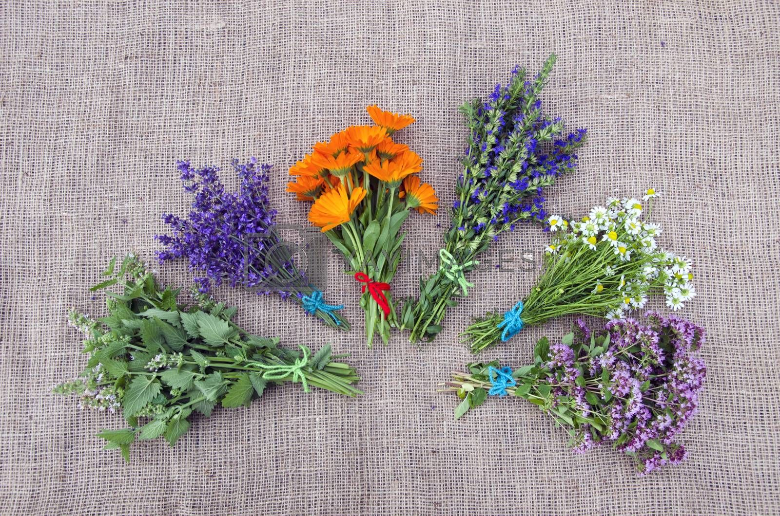 Royalty free image of Bundle of freshly picked medical herbs placed on linen background by alis_photo