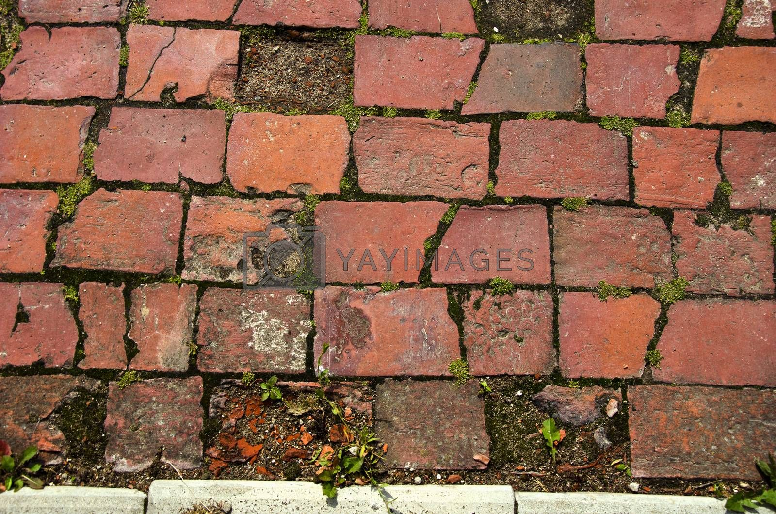 Royalty free image of Old  red brick decorative pavement background by alis_photo