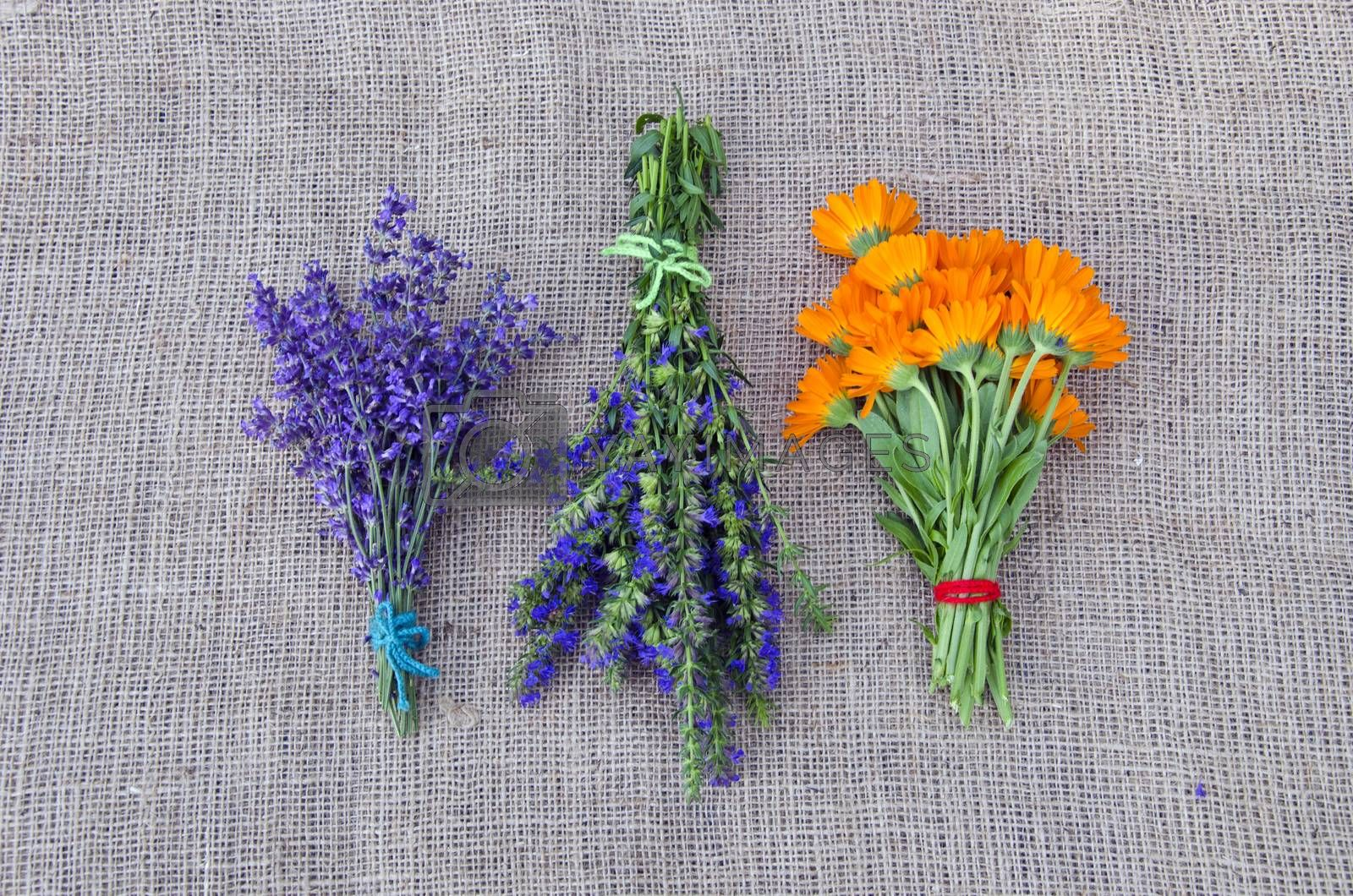 Royalty free image of  bundles of freshly picked herbs placed on linen background   by alis_photo