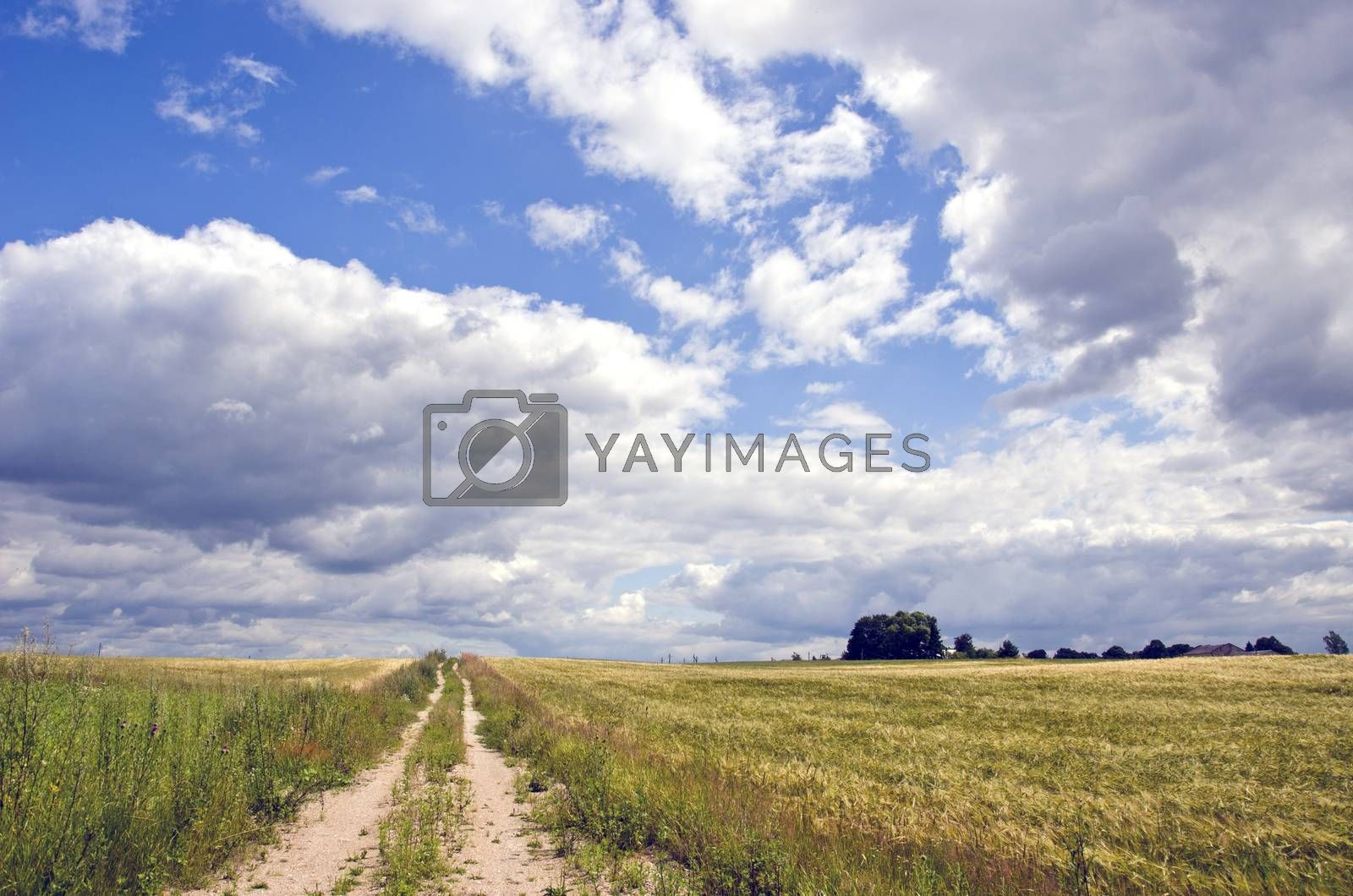 Royalty free image of Rural landscape with bushes and clouds   by alis_photo