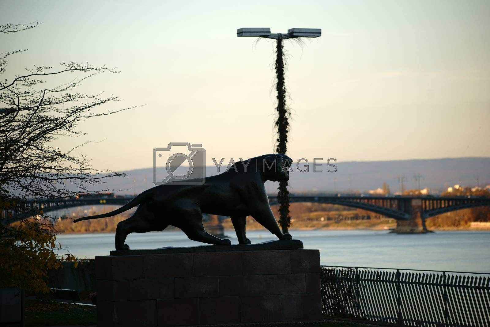 Royalty free image of Sculpture Tiger Mainz by ginton