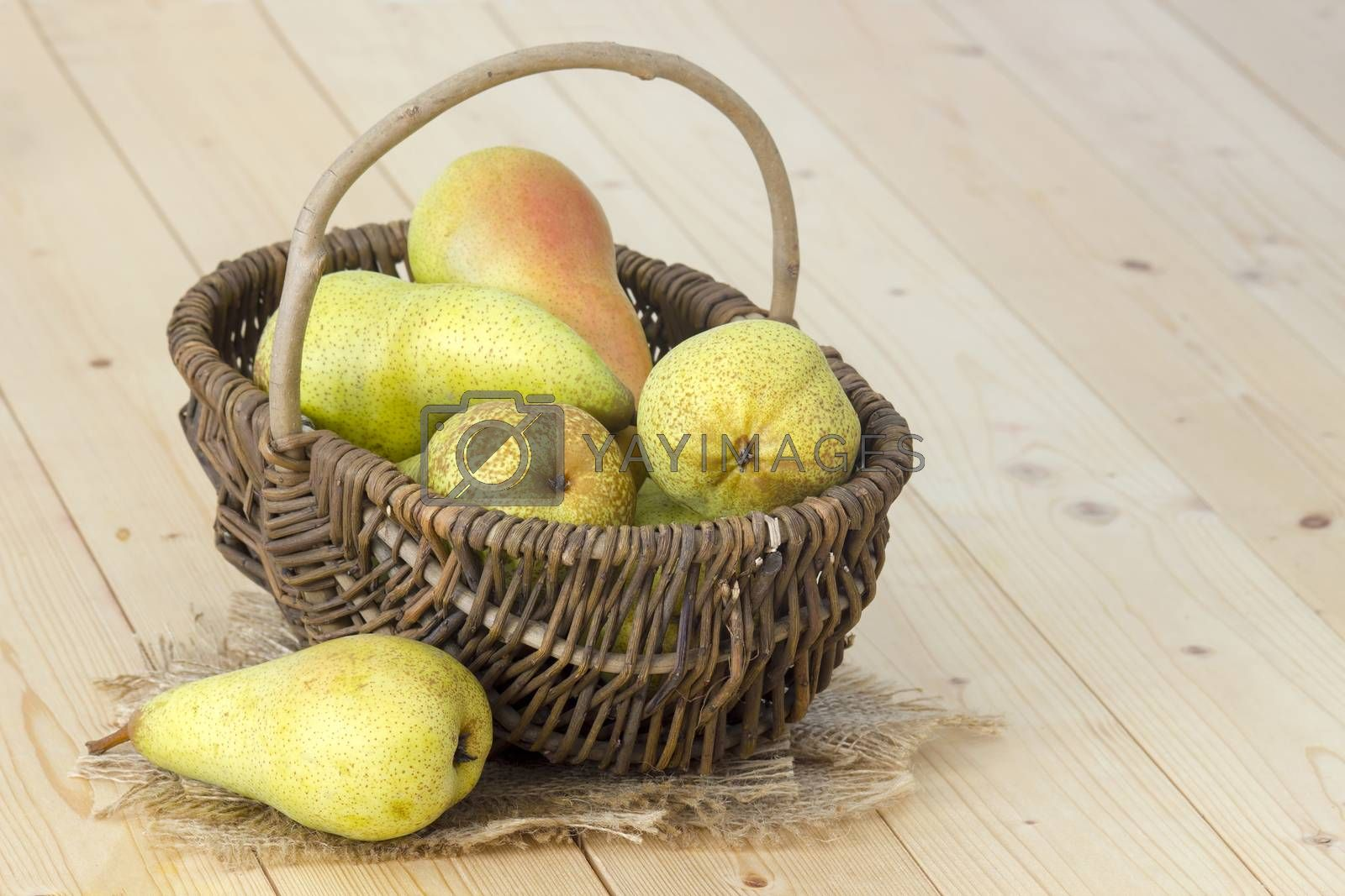 Juicy fresh pears in a basket wooden background