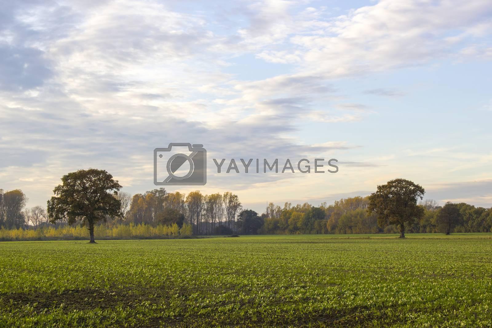 Beautiful autumn trees. Autumn landscape.