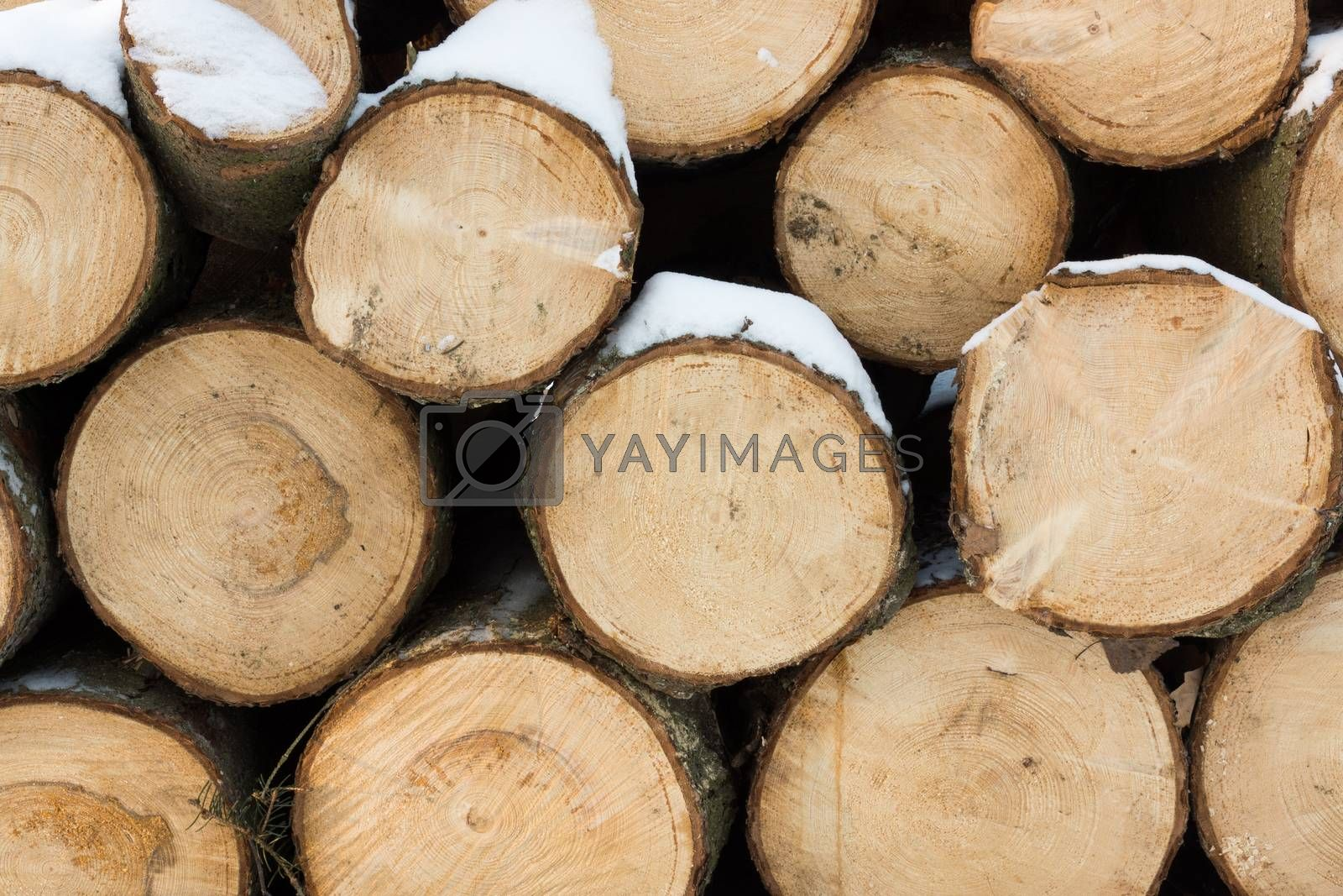 The photo shows logs of wood with snow