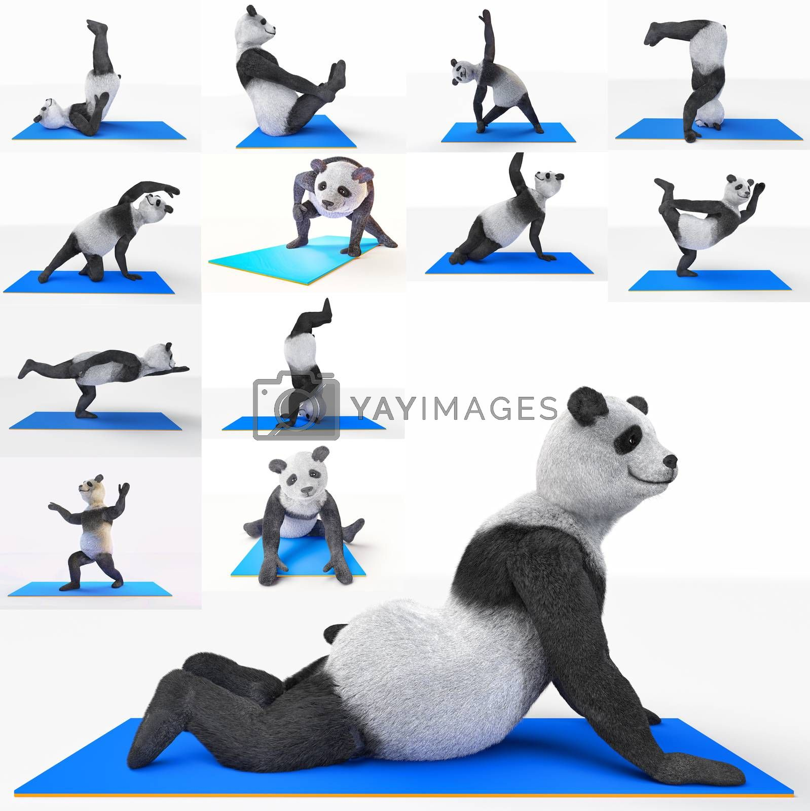 animal panda athlete sportsman doing yoga stretching workout. protagonist character collage collection athletic sports. set illustrations poses sports, strengthening muscular system, improving health