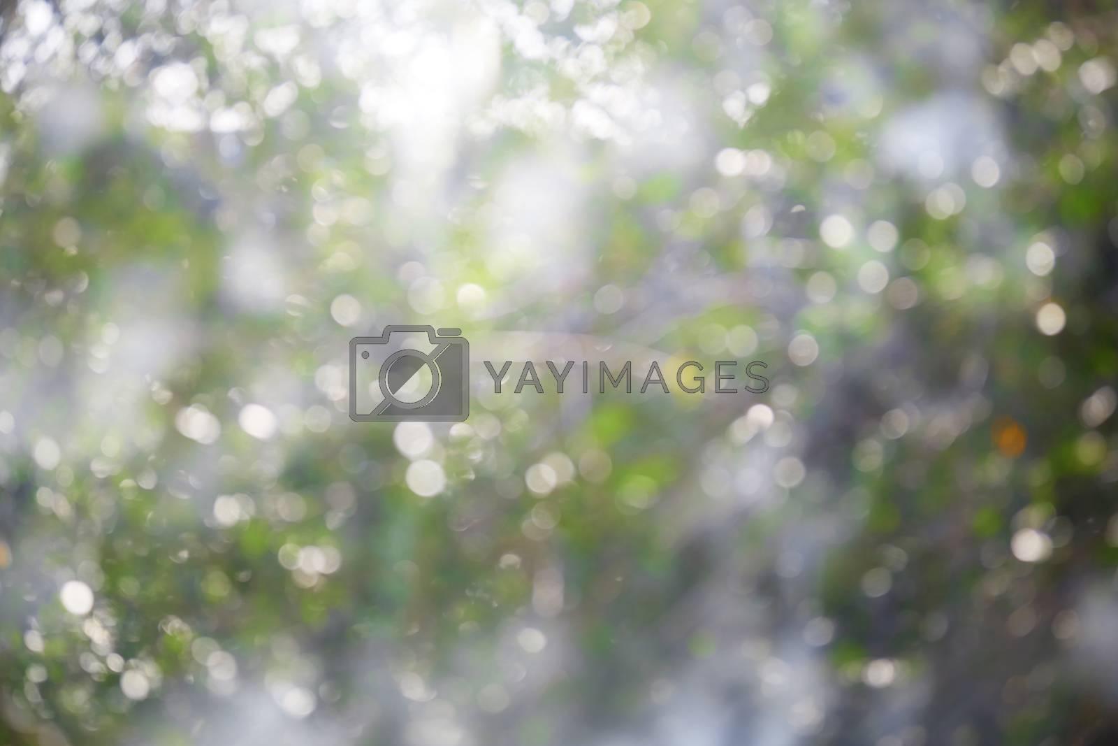 Defocused bokeh background of greenery at springtime