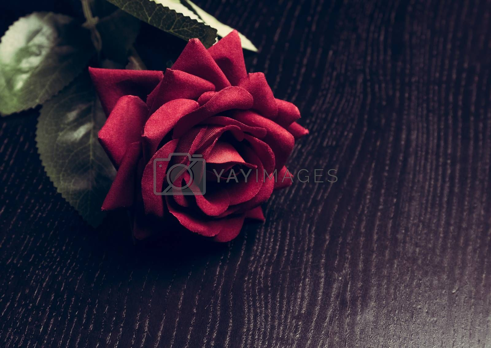 velvet red rose on wood table, vintage style, valentine day and love concept
