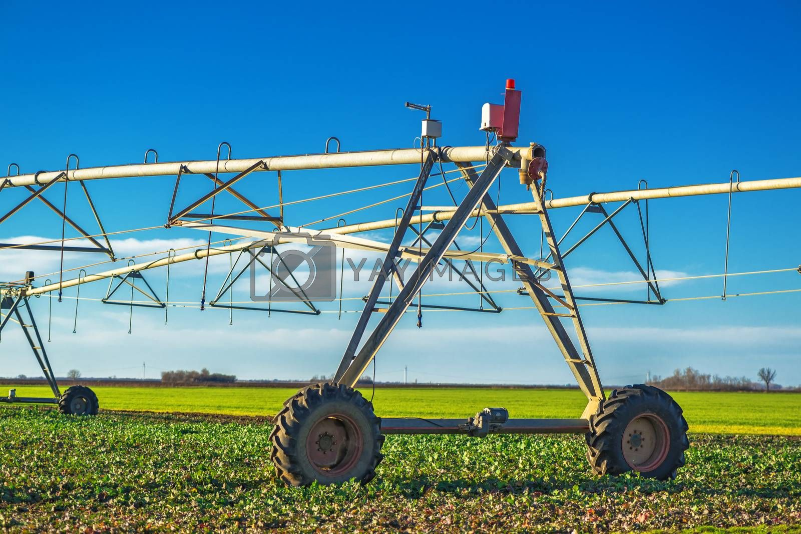 Royalty free image of Automated farming irrigation sprinklers by stevanovicigor