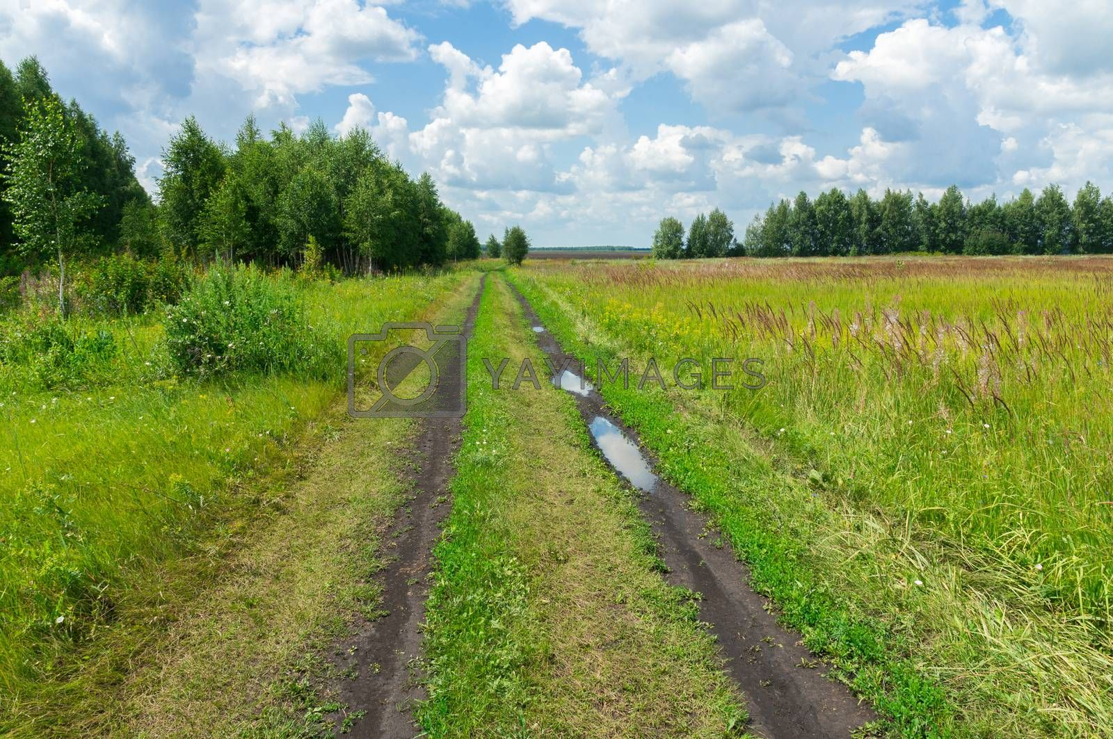 The photo shows a road in a field