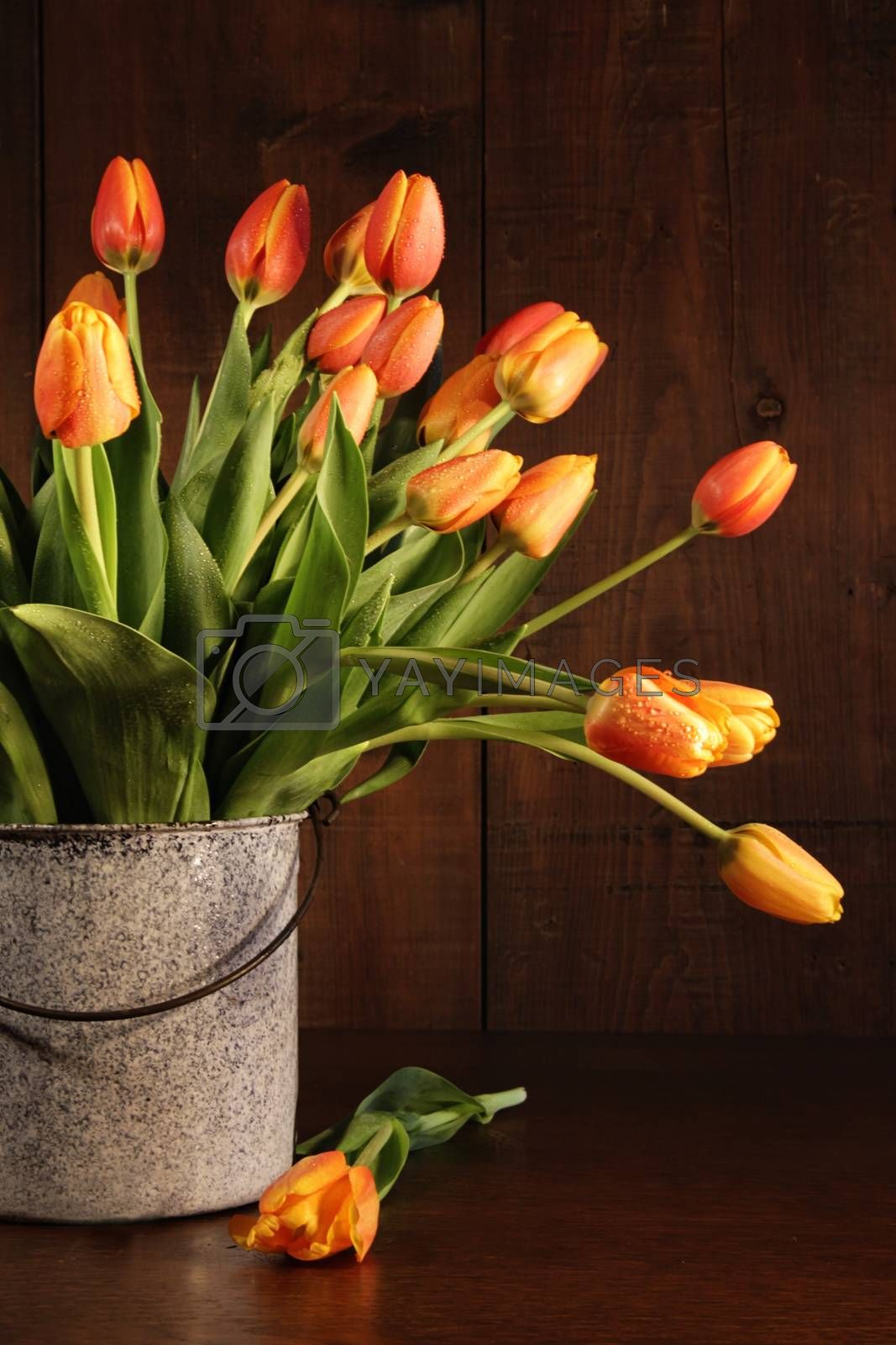 Yellow and orange tulips in old bucket on table