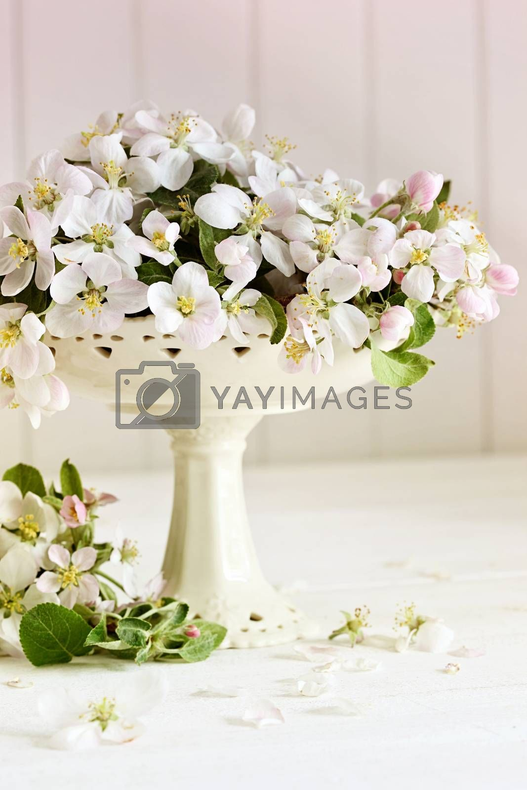 Fresh apple blossoms on white table