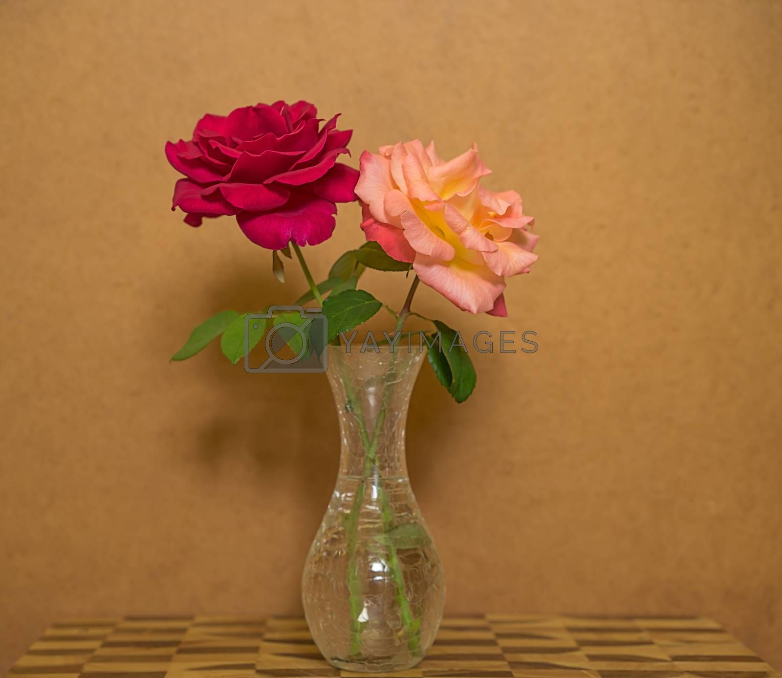 two rose flowers in a vase