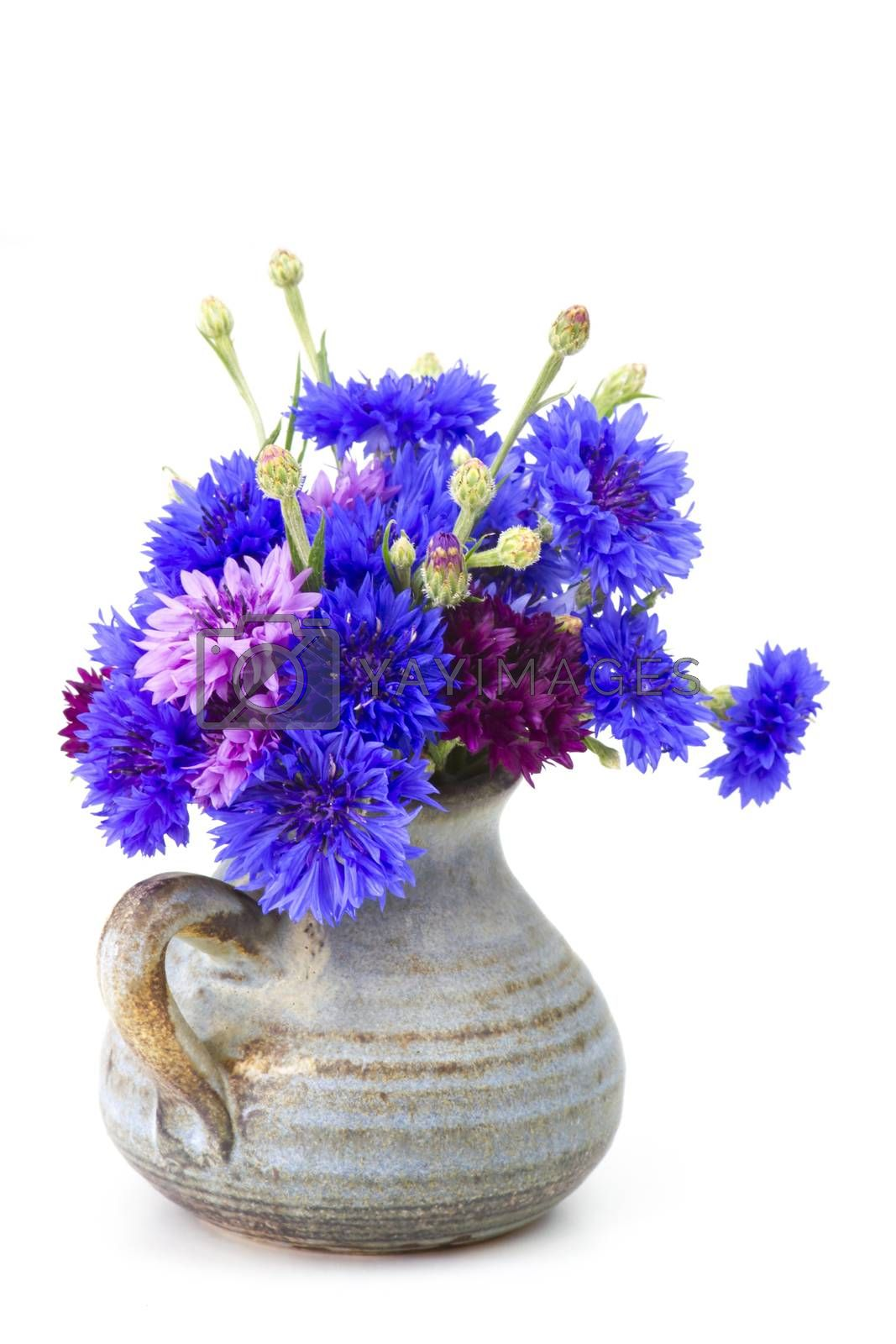 bouquet of cornflowers on white background