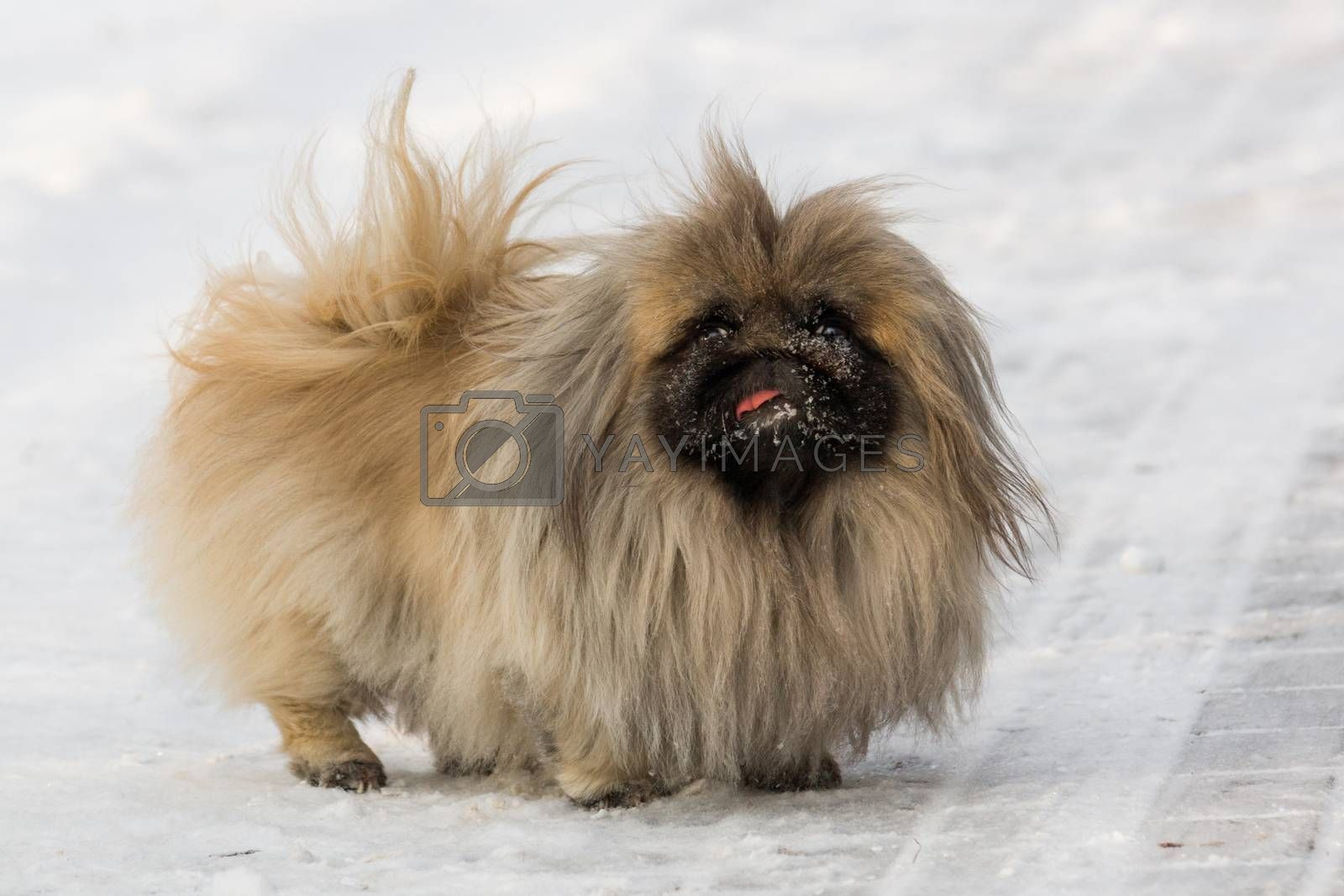 The photo shows a dog in the snow