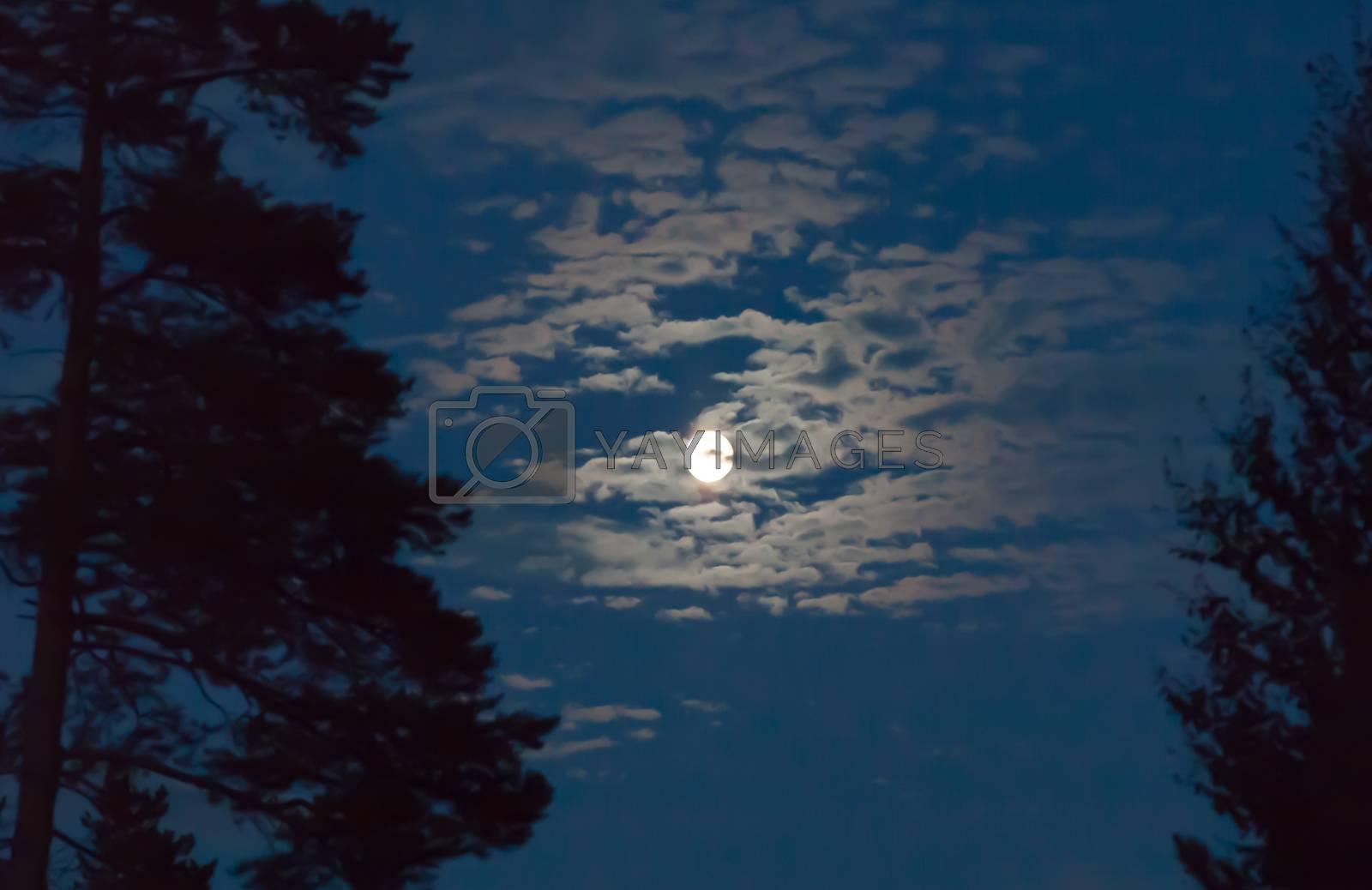 lunar landscape in evening forest