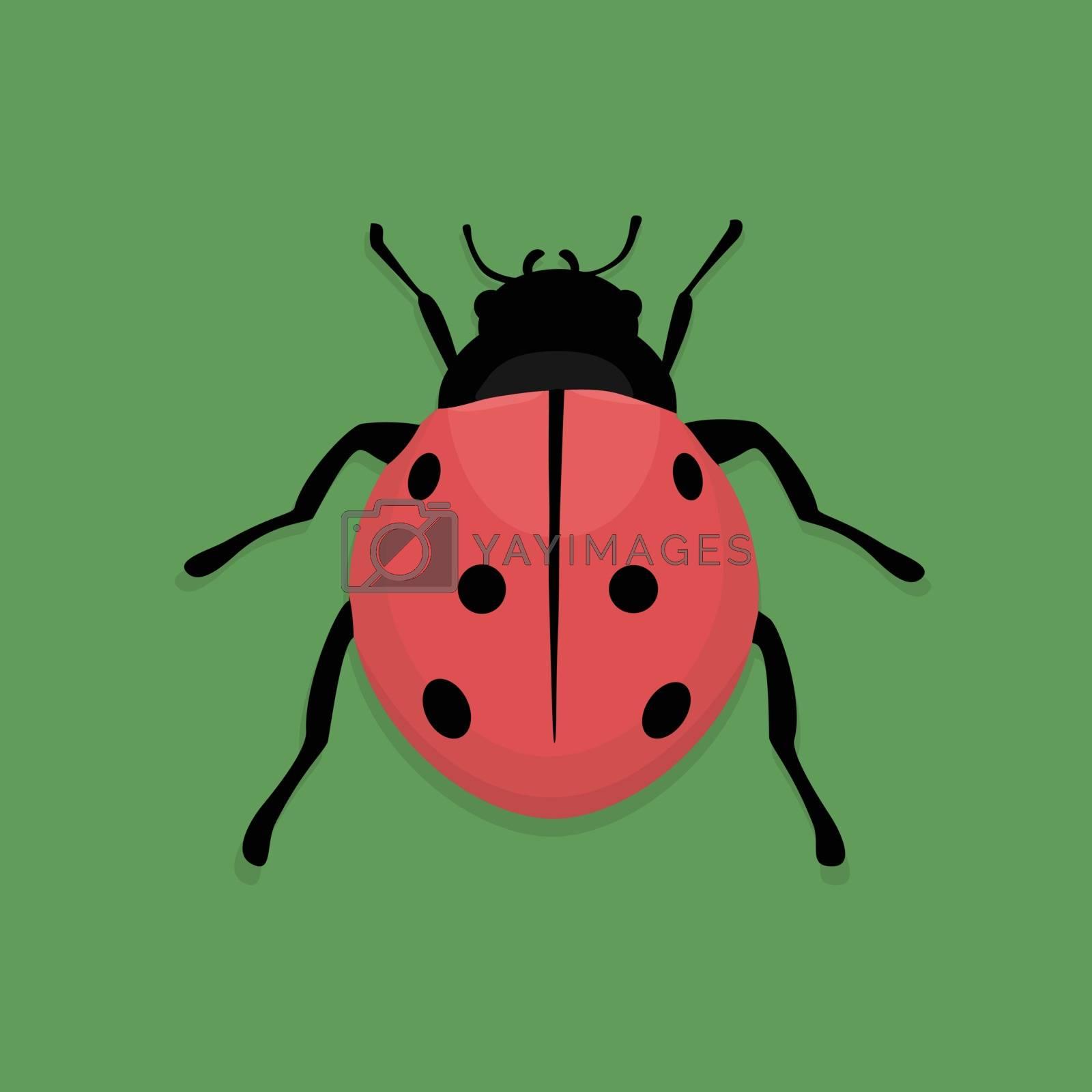 Royalty free image of Ladybug by Oleksii
