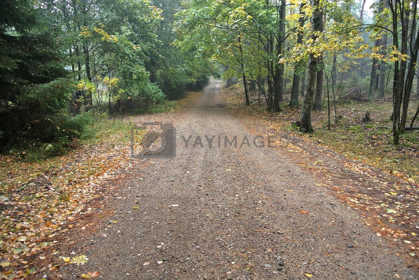 Royalty free image of Autumn forest road by info@krzysztofpiotrowicz.com