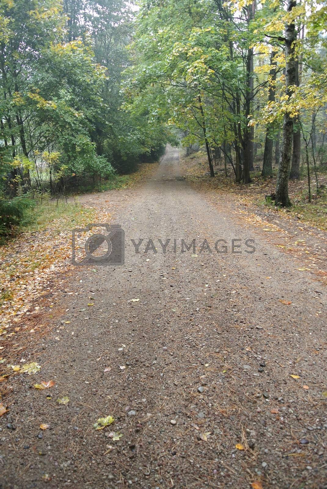 Autumn forest road by info@krzysztofpiotrowicz.com