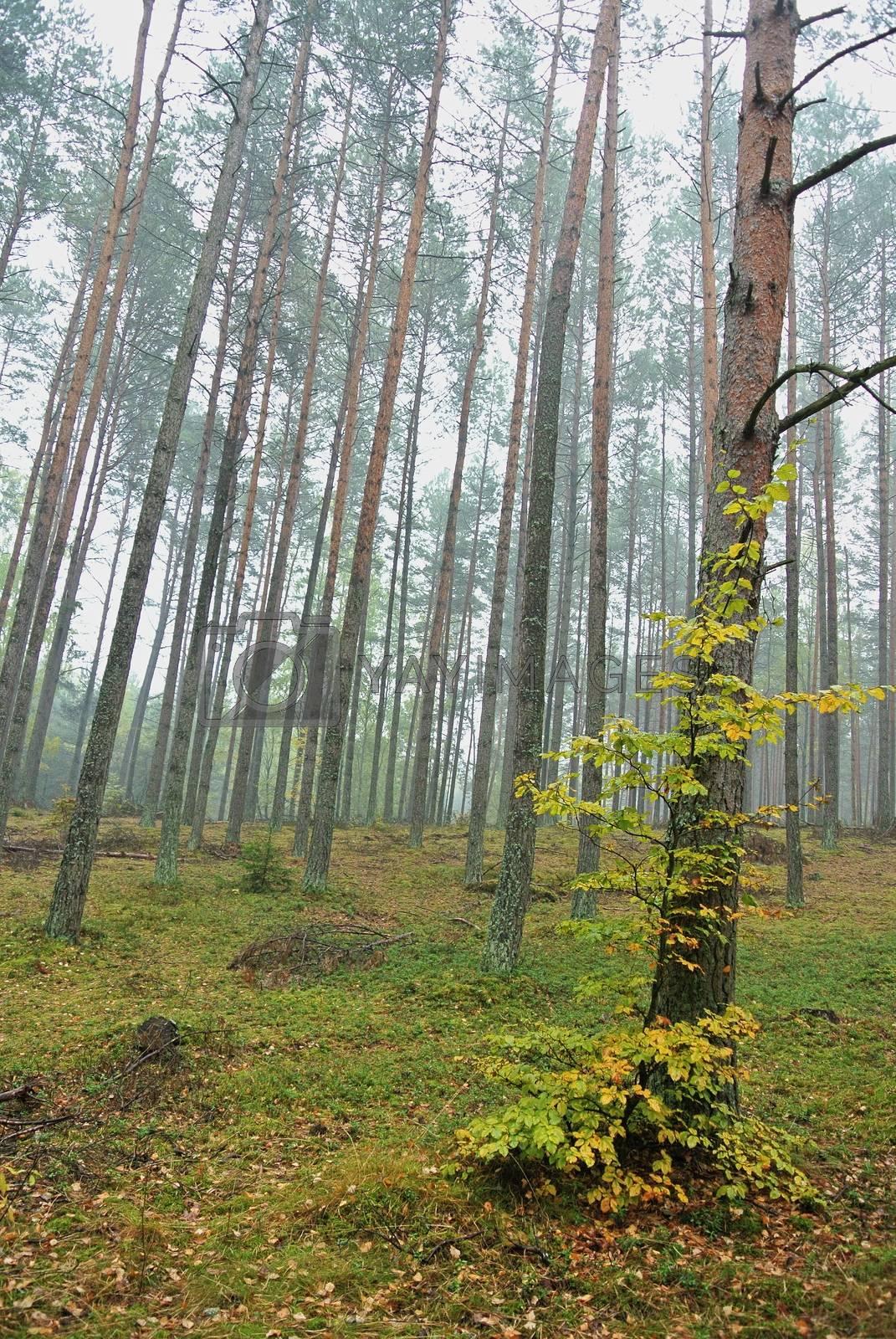 Royalty free image of Autumn landscape Poland by info@krzysztofpiotrowicz.com