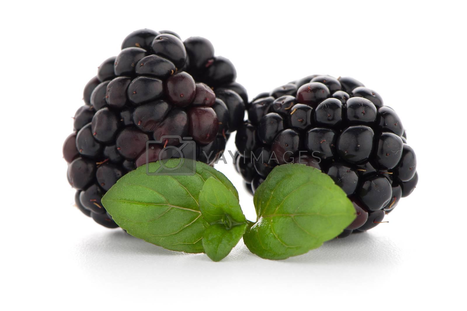 Royalty free image of Blackberries with leaves by homydesign