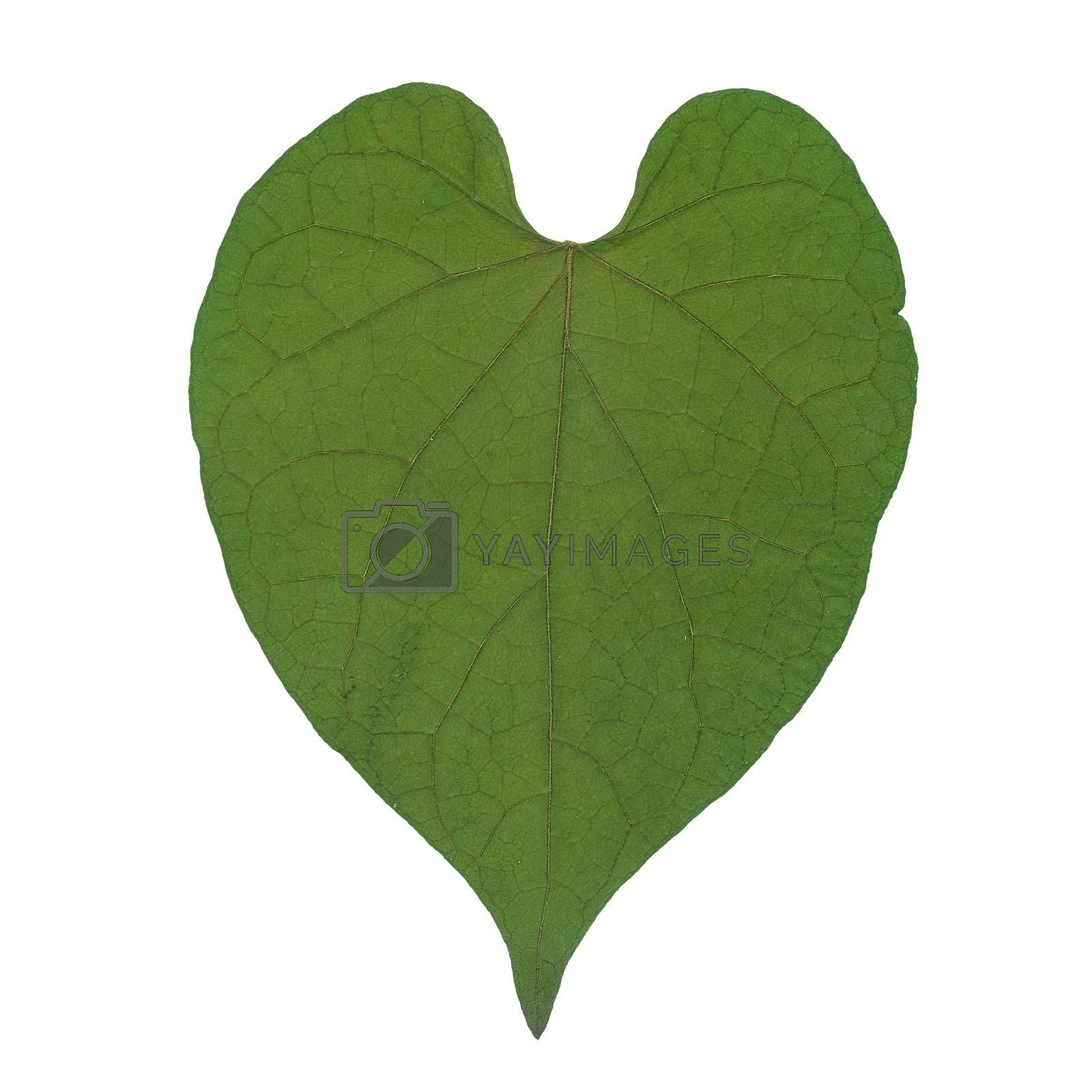 Royalty free image of Dry leaf in shape heart  by simpleBE