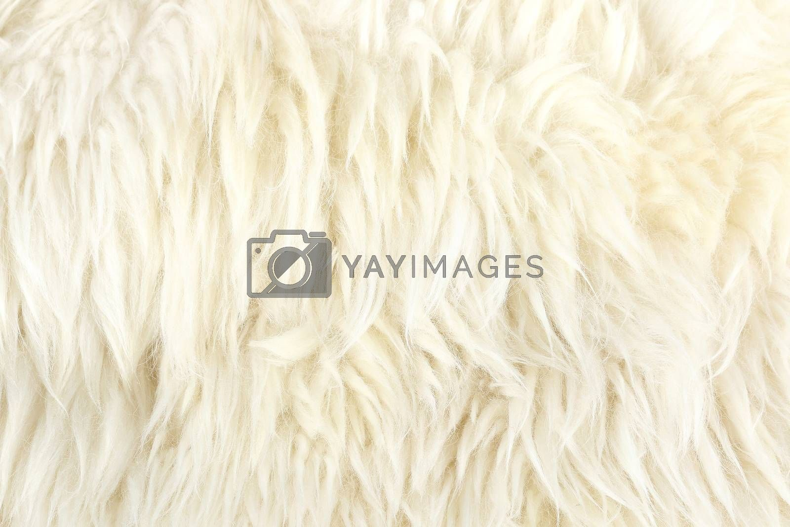 Royalty free image of fur by simpleBE