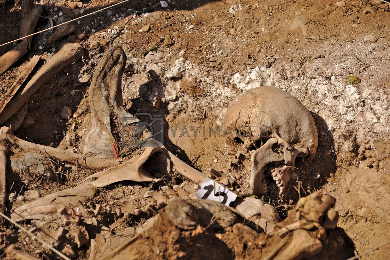 Royalty free image of Mass grave of the Spanish Civil War (1936) by antecessor