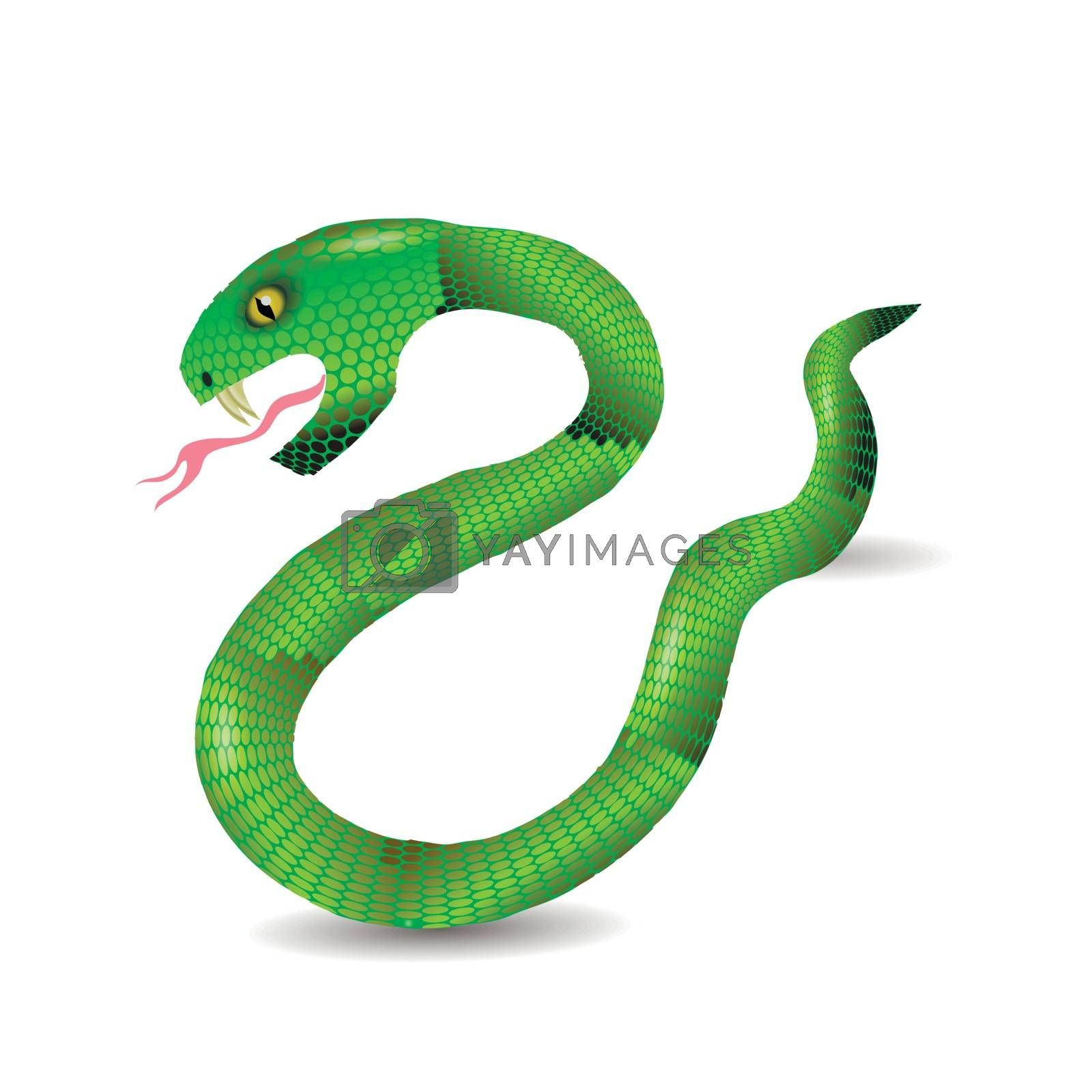 Royalty free image of Cartoon Green Snakes by valeo5