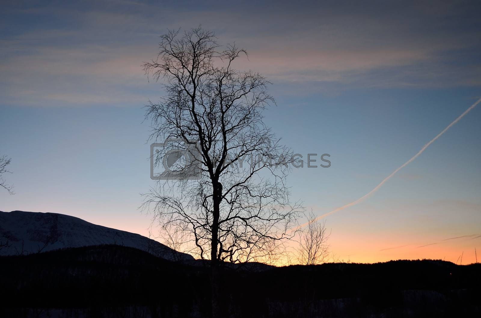 Royalty free image of lone tree in front of colorful dawn sky by Finephotoworks