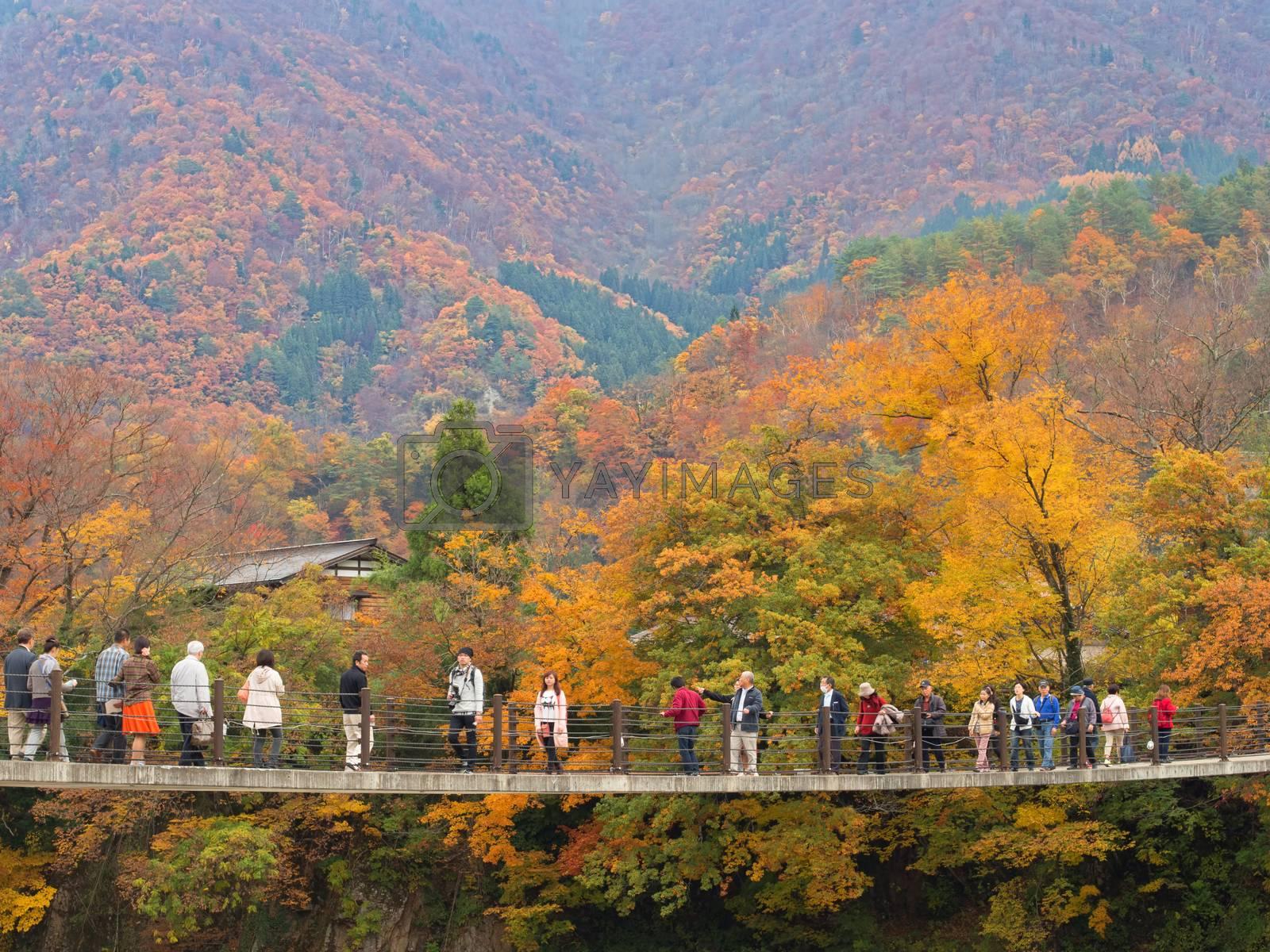 Royalty free image of bridge crossing at shirakawago by zkruger