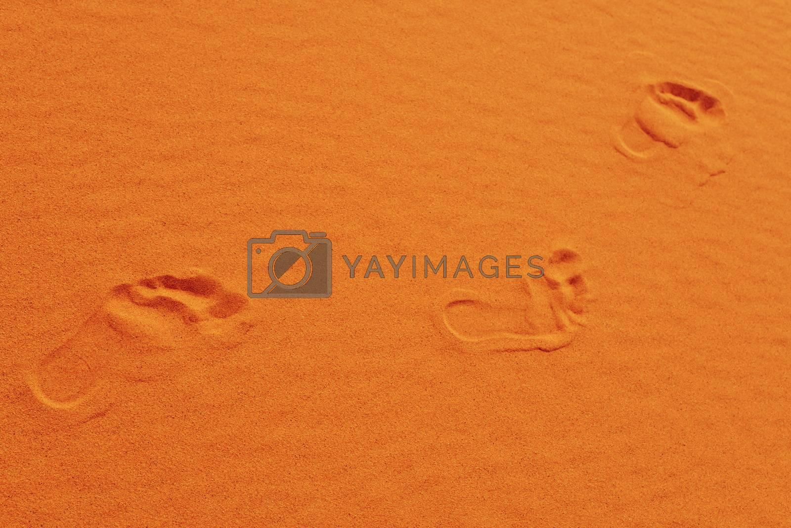 Royalty free image of footsteps in Sahara by radekprocyk