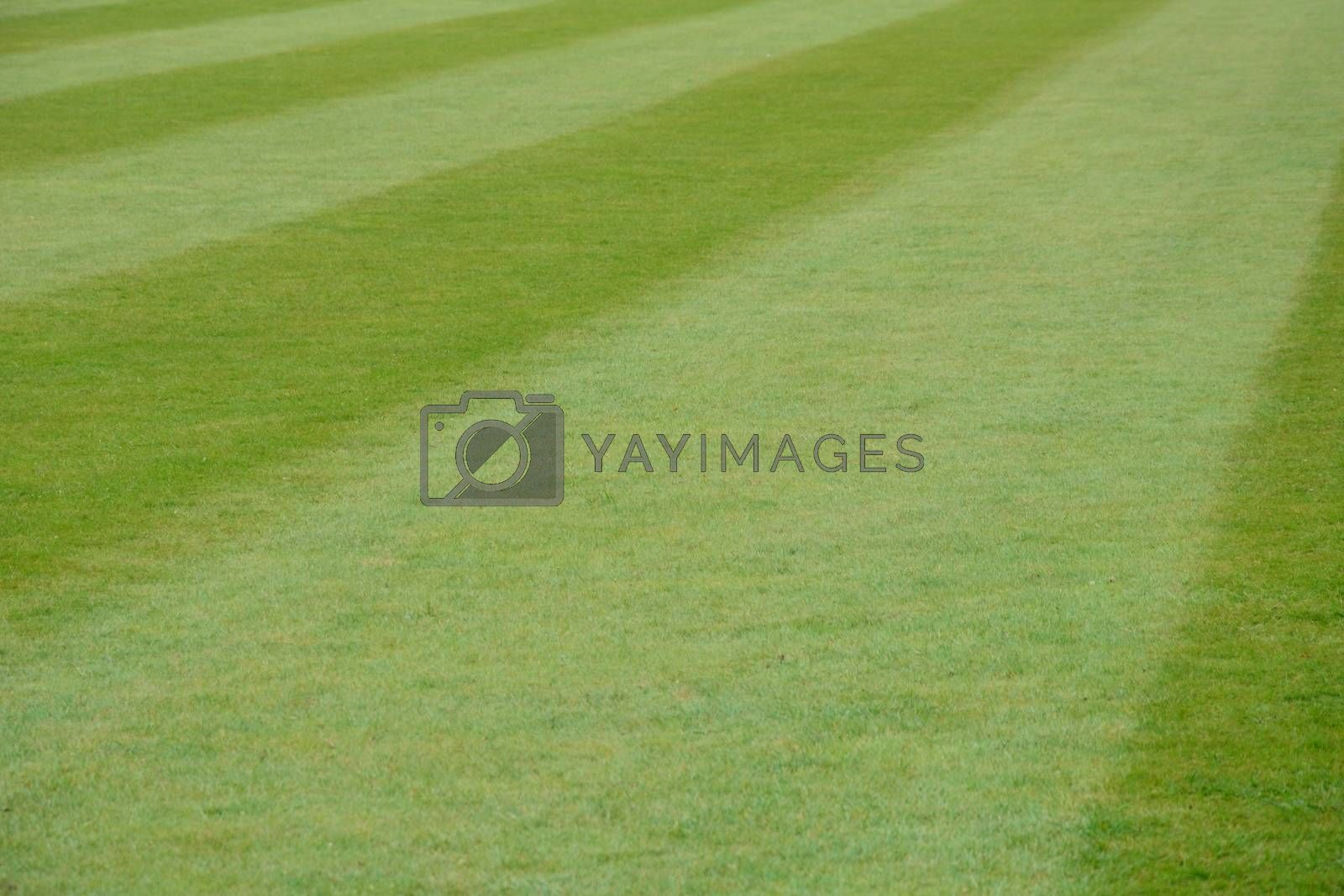 Immaculate Mowed Lawn