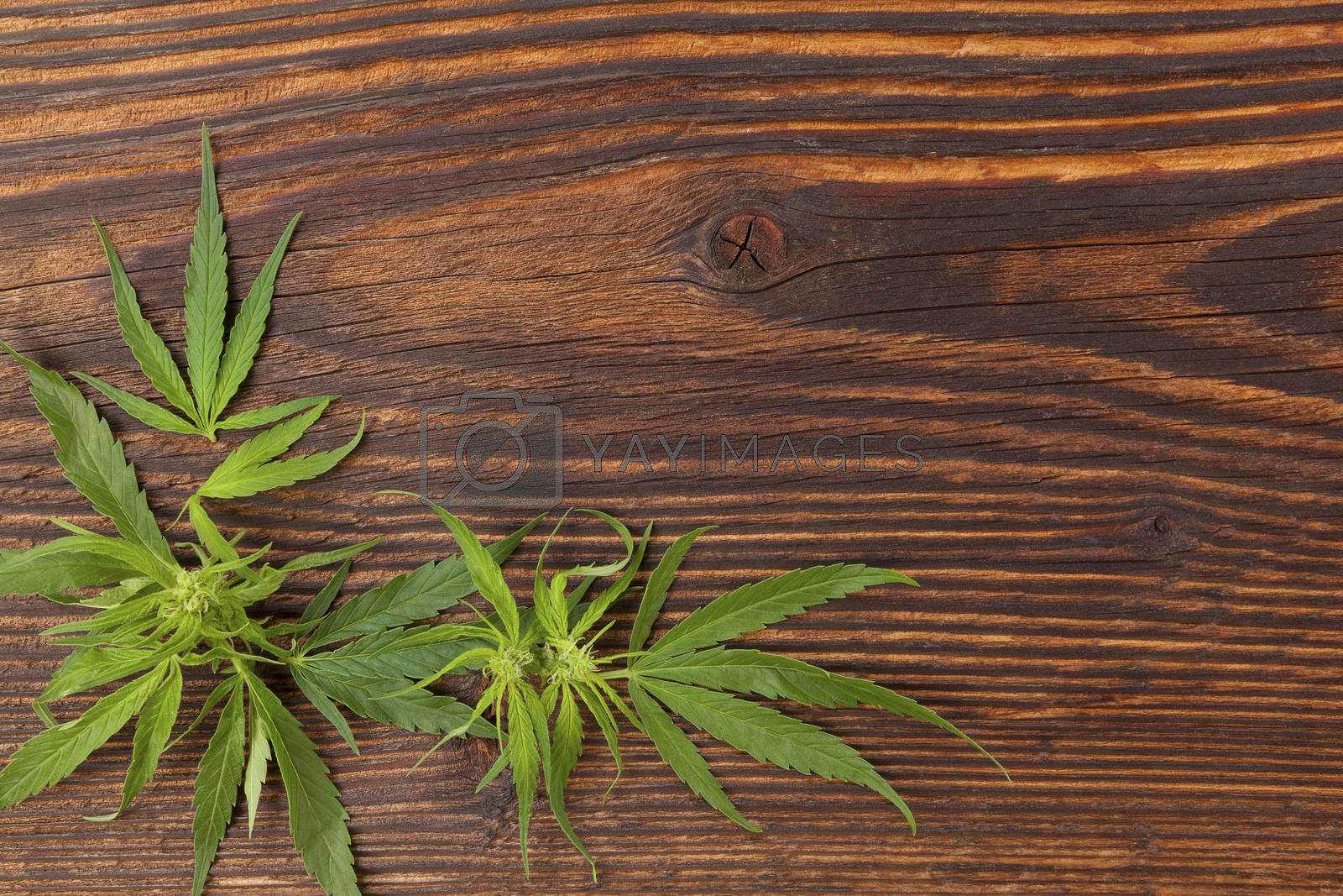 Cannabis buds and foliage on brown wooden table, top view. Medical marijuana, alternative medicine.