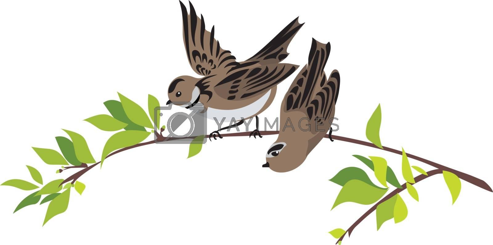 Sparrows on a spring tree branch, vector illustration
